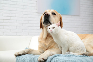 Adorable dog and cat together on sofa indoors. Friends forever Wall mural