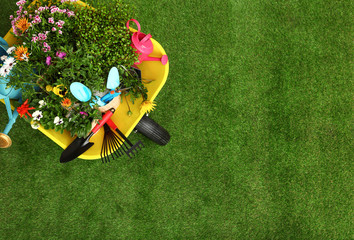 Poster Jardin Wheelbarrow with flowers and gardening tools on grass, top view. Space for text