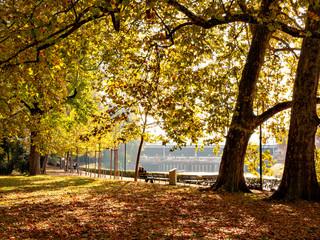Autumn color of Platzspitz Park in Zurich, Switzerland
