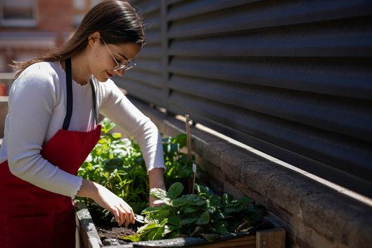 Beautiful woman taking care of urban vegetables garden