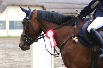 Foto op Plexiglas Head shot closeup of a beautiful award winner racehorse