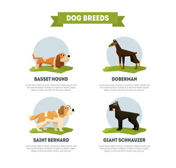 Dog Breeds Banner Template, Basset Hound, Doberman, Saint Bernard, Giant Schnauzer Vector Illustration
