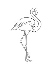 Black and white image of flamingo isolated on white background.