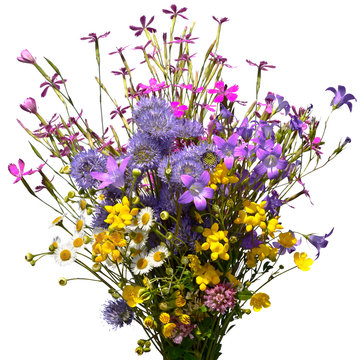 Bouquet of wild flowers isolated on white