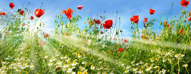 Fotoväggar - Flower meadow with sunbeams