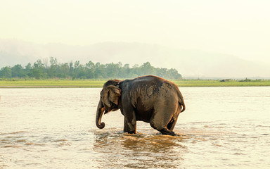 Elephant bathing in the Gandak river at sunset in Chitwan national park, Nepal