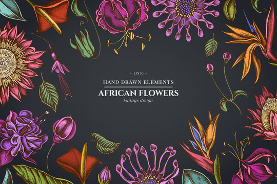 Floral design on dark background with african daisies, fuchsia, gloriosa, king protea, anthurium, strelitzia