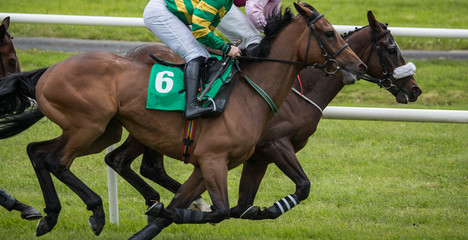 Close up on two galloping race horses and jockeys competing for first position