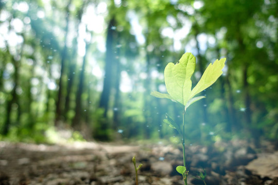 magic light in forest shines on young plant