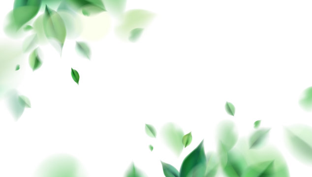 Green nature leaves on white background vector isolated elements design