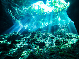 Cenote scuba diving, underwater cave in Mexico Wall mural