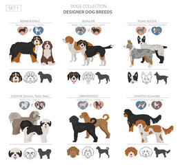 Designer dogs, crossbreed, hybrid mix pooches collection isolated on white. Flat style clipart set