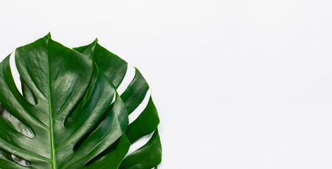 Fotomurales - Monstera leaves on light gray background. Flat lay, top view, copy space. Summer background, nature. Creative minimal background with tropical leaves. Leaf pattern