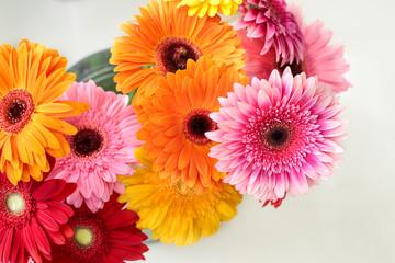 Foto op Canvas Gerbera gerbera flowers close-up