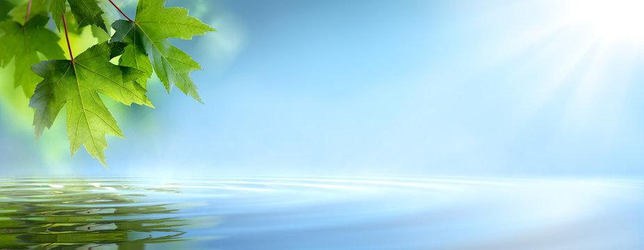 Fresh maple leaf reflect in water