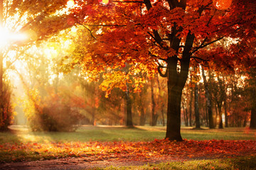 Foto auf Leinwand Herbst Autumn Landscape. Fall Scene.Trees and Leaves in Sunlight Rays