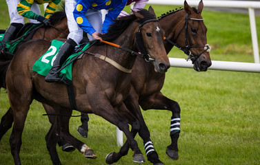 Competing race horses galloping on the race track