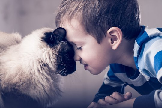 cat child balinese together play. enjoy friend.