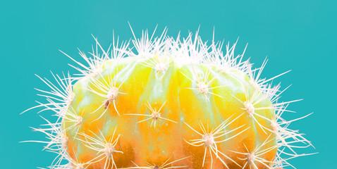 Foto op Plexiglas Cactus Cacti colorful fashionable mood. Trendy tropical Neon Cactus plant on blue Color background. Fashion Minimal Art Concept. Creative Style.