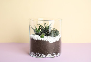 Glass florarium with different succulents on color background