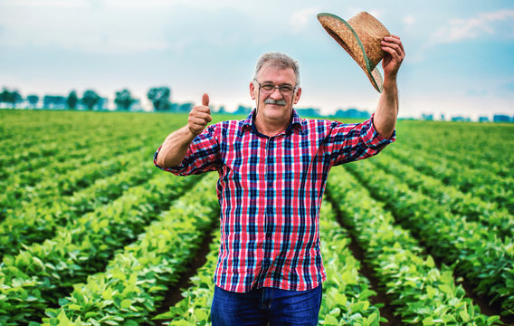 Farmer in a soybean field. Agricultural concept
