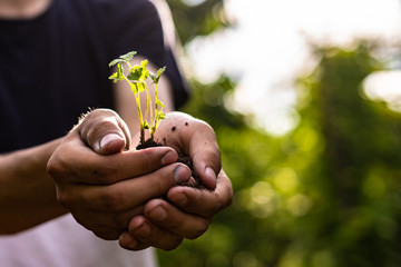 close up male farmer hands holding young small sprout in the ground soil under sunshine