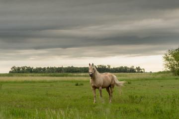 Fototapeta White Horse Stands In Empty Field