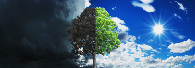 concept tree growing and dry with sky and sun background Wall mural