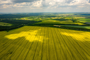 Photo sur Plexiglas Culture view from the quadcopter on the field of flowering rapeseed with intricate patterns of clouds floating in the sky