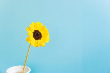 Sunflower, light blue background. ひまわり 水色背景 Fototapete