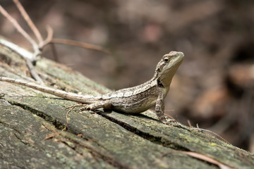 A small lizard sitting on a dead tree stump lying on the ground