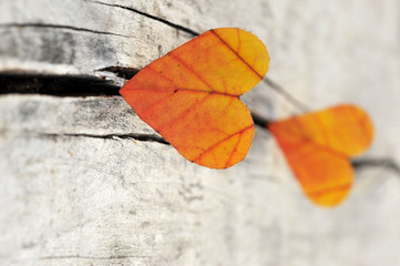 Autumn red and orange leaves - heart.  Fall wooden background.