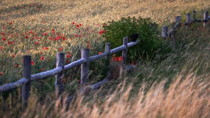 The cat on the fence - Die Katze auf dem Zaun