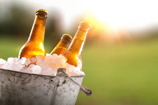 Three beer bottles in bucket full of ice cubes field