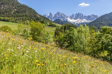 Sommerliche Bergwiesen im hinteren Villnösstal