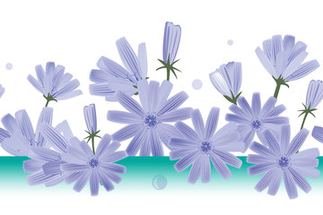 Wall Mural - Chicory flowers vector seamless pattern. Design for wallpapers, textile, or chicory extract packaging