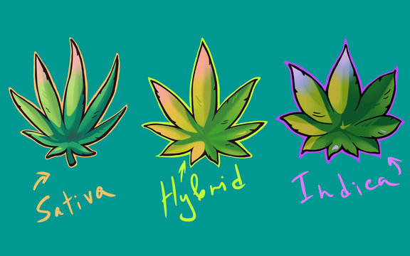 Cannabis sativa, indica and hybrid leaves in graffiti style
