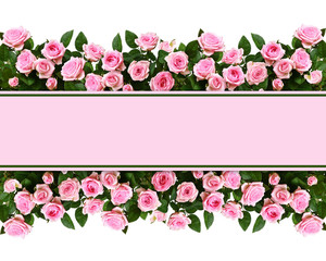 Pink rose flowers in a border arrangements with place for text