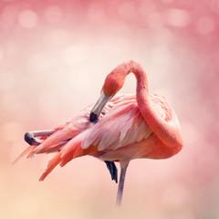 Garden Poster Flamingo Pink Flamingo portrait