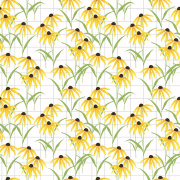 Black eyed susan flower seamless pattern vector.
