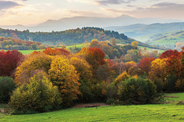 beautiful autumn countryside in mountain at dusk. trees in colorful foliage on the edge of a rural field. colorful clouds on the sky. mountain with high peak in the distance