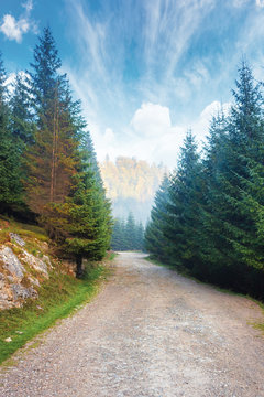 gravel road through forest in mountains. spruce trees along the way. foggy autumn weather with bright blue sky and clouds. discover new destinations concept