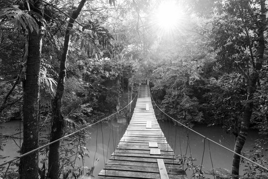 Tranquil Forest Footbridge Black and White