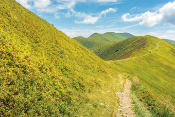 traverse path through mountain range. beautiful summer landscape at high noon. green grassy alpine hills of european blueberry. sunny weather, fluffy clouds on the azure sky. beautiful destination