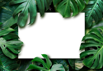 Wall Mural - Tropical leaves and blank white paper background