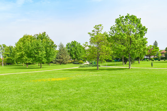 Green grass green trees in beautiful park white Cloud blue sky in noon. - Image