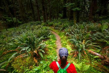 A woman hikes amidst green ferns along the lush Bogachiel Rain Forest Trail #825 in the Olympic National Park. Wall mural