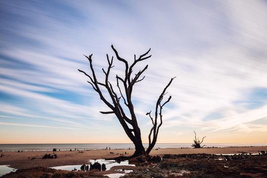 Long exposure image of Lone Tree at the beach, Botany Bay, Edisto Island, SC, USA