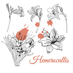 Set with monochrome  sketch of  hemerocallis flowers  and abstract spots. Hand drawn ink  sketch isolated on white background