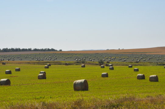 Hay Bales on Textured Field